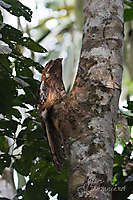 Tambopata, Amazonie péruvienne