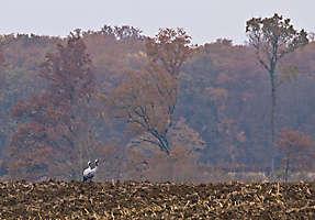 octobre 2014 - couleurs d'automne
